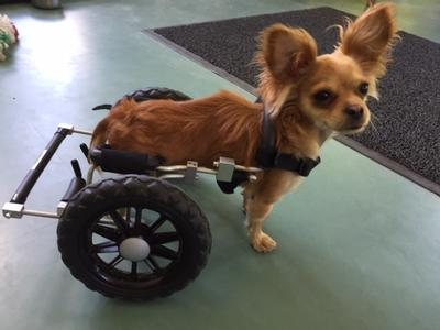 Giant Dogs - Eddie's Wheels for Pets - The Pet Mobility Experts